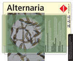 Alternaria molds have emerged as opportunistic pathogens particularly in patients with immunosuppression, such as the bone marrow transplant patients. They are one of the causative agents of phaeohyphomycosis. Cases of onychomycosis, sinusitis, ulcerated cutaneous infections, and keratitis, as well as visceral infections and osteomyelitis due to Alternaria have been reported. In immunocompromised patients the colonization may end up with development of invasive disease.