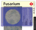 As well as being common plant pathogens, Fusarium spp. are causative agents of superficial and systemic infections in humans. Infections due to Fusarium spp. are collectively referred to as fusariosis. The most virulent Fusarium spp. is Fusarium solani. Trauma is the major predisposing factor for development of cutaneous infections due to Fusarium strains. Disseminated opportunistic infections, on the other hand, develop in immunosuppressed hosts, particularly in neutropenic and transplant patients. Fusarium infections following solid organ transplantation tend to remain local and have a better outcome compared to those that develop in patients with hematological malignancies and bone marrow transplantation patients.