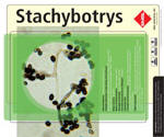 Stachybotrys produces trichothecene mycotoxins, the satratoxins. These toxins may be acquired by ingestion of food products contaminated with the fungus or experimentally, via direct inhalation of the spores. In addition to its mycotoxins, Stachybotrys produces an hemolysin, stachylysin, which lyses sheep erythrocytes. The existence of the mycotoxin, as well as the stachylysin, has been demonstrated in some strains.