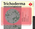 Although it is commonly considered as a contaminant, Trichoderma may cause infections in presence of certain predisposing factors. Very few human cases due to Trichoderma have been identified. Trichoderma infections are opportunistic and develop in immunocompromised patients, such as neutropenic cases and transplant recipients, as well as patients with chronic renal failure, chronic lung disease, or amyloidosis. Peritonitis, pulmonary, perihepatic, and disseminated infections have so far been reported.