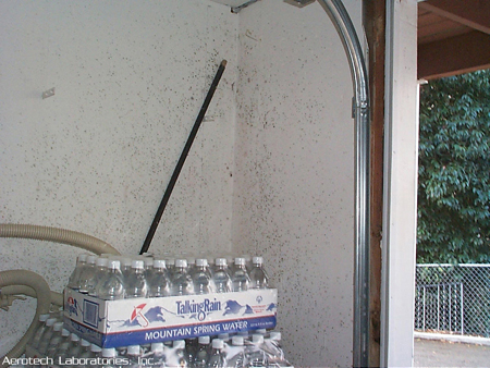 PICTURES OF MOLD - Cla... Cladosporium Mold On Wall
